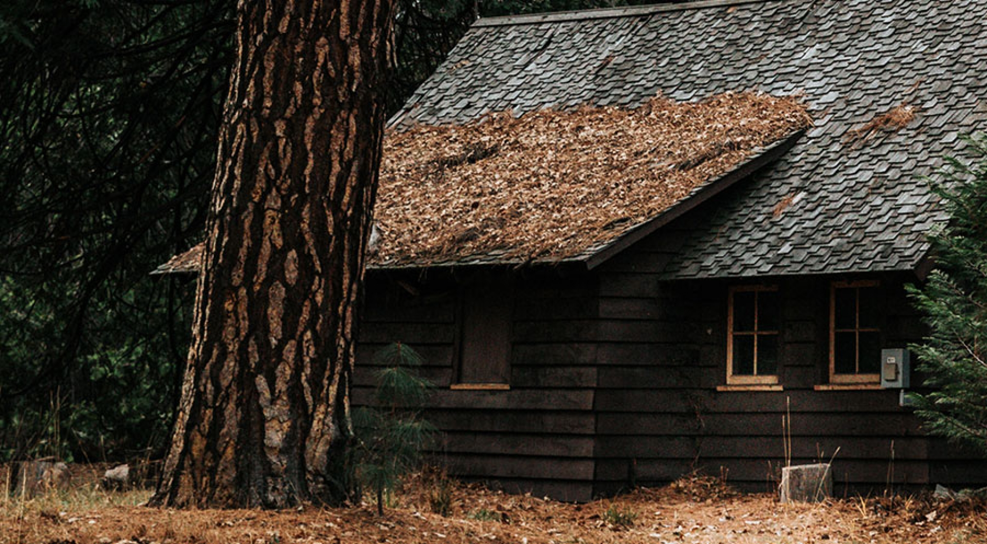 What To Do About Leaves on Your Roof